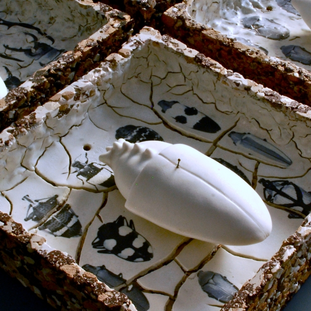 collezione entomologica